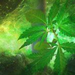 Effecten van het roken van marihuana